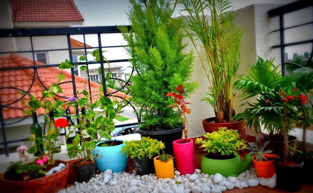 Balconul – coltul verde al apartamentului