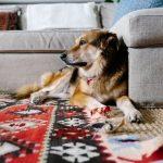 Cum decorezi pet-friendly casa