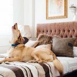 Sfaturi practice pentru viata in apartament cu animale de companie