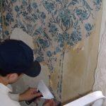 Cum sa indepartezi eficient si usor vechiul Tapet