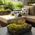 Plante rezistente la seceta pentru gradina ta