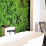 Trenduri eco – peretele verde