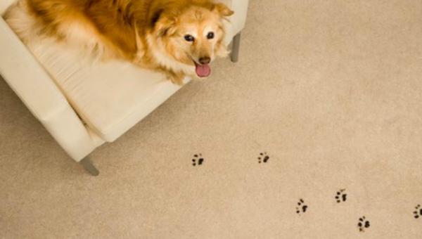 pet-spots
